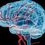 10 edzés nélkül töltött nap csökkentheti az agy vérkeringését (Maryland-i Egyetem)
