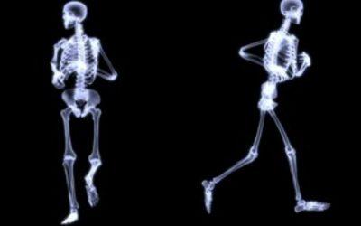A csontok fiziológiája (Chad Waterbury)