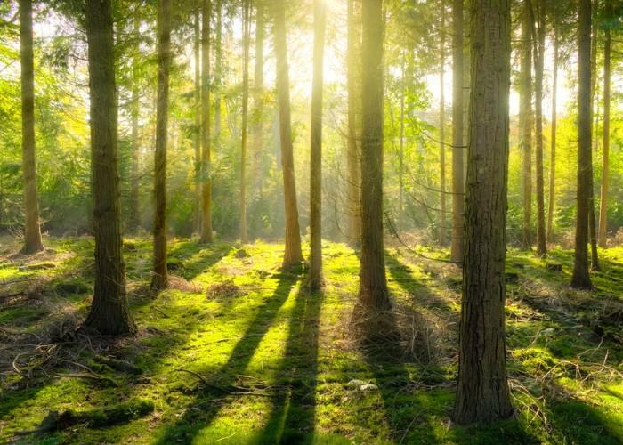 Egy erdei séta (Kevin Carr)